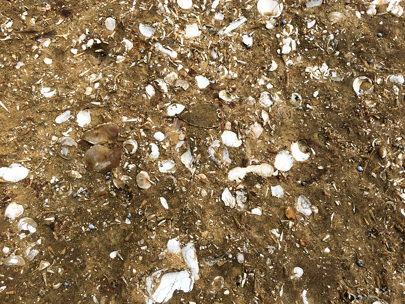 tasmania-sandstone-with-fossils