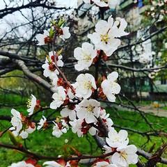 Весна прийшла #spring #flowers