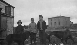 Three young boys and three sled dogs, Cartwright, Labrador / Trois garçons et trois chiens de traîneau, Cartwright (Labrador)