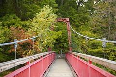 flower(0.0), rolling stock(0.0), waterway(0.0), suspension bridge(1.0), canopy walkway(1.0), walkway(1.0), bridge(1.0),