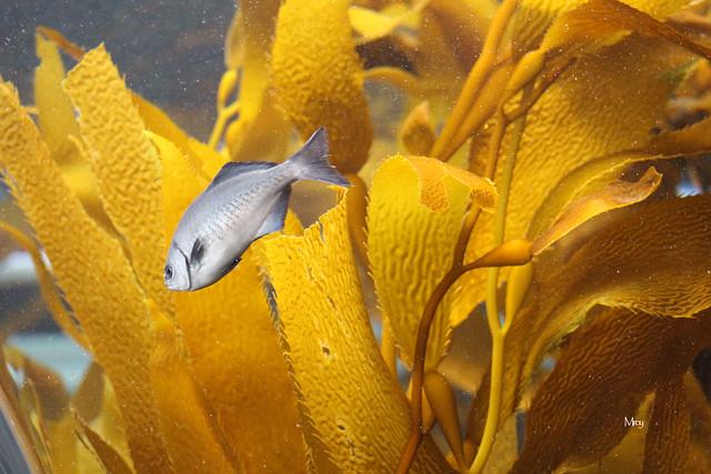 monterey bay aquarium 160