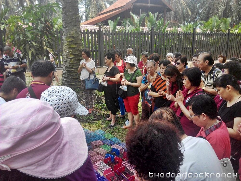 life liberation, santi forest monastery, sutera, ulu tiram, 宁心寺, 放生仪轨, travels,malaysia,johor bahru