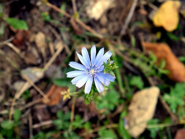 02) Flower in Bloom