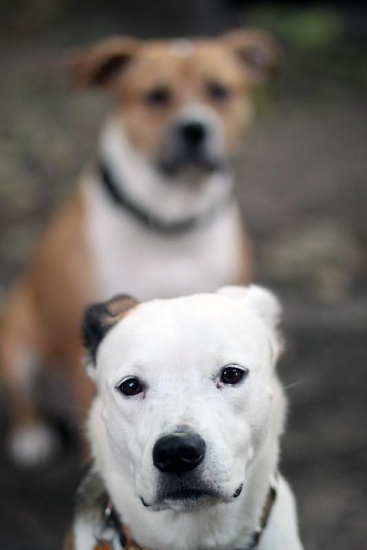 Daisy and Penny