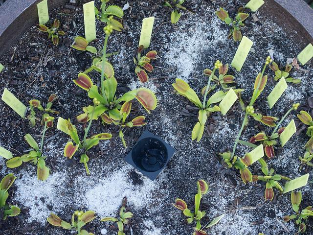 Dionaea Rescues