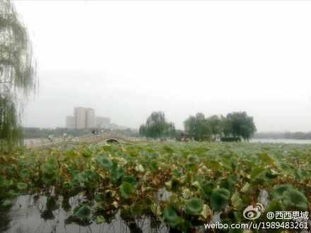 大明湖里的夏雨荷