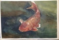 Estudo de carpa