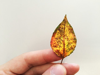 Leaf as artwork