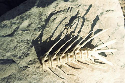 shadow usa fish skeleton kansas glenelder