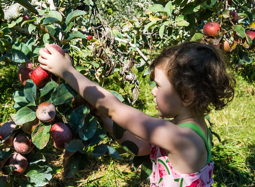 Picking Apples by Geoff Livingston