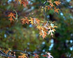 few autumn leaves