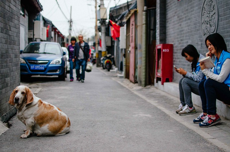 72/365: Dog in Alley