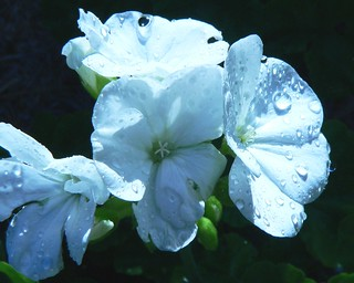 wet white
