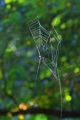 Abstract Orb Weaver