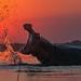 Hippo in Okavango Delta by Joma516