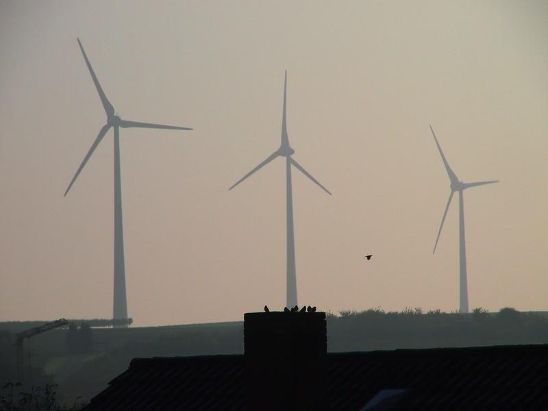 Wind turbines & Birds / Wiatraki i ptaki