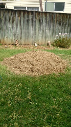 No dig garden, day 1