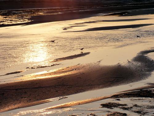 sunset sun beach birds sand october sundown provincetown capecod massachusetts landsend moors sandpiper waterbirds 2014 jaym mahler9