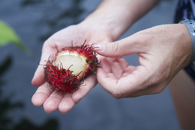 Mamon Chino - Costa Rican Rambutan Fruit