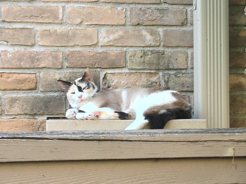 Electrical box cat