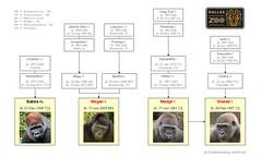 Gorilla Family - Dallas - Family Group