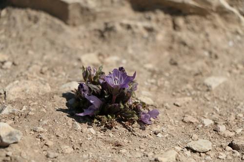 """Segesta: un fiore in mezzo al """"deserto"""""""