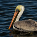 Bozo1945 has added a photo to the pool:One of my feathered friends at the  Bonnabel Boat Launch.