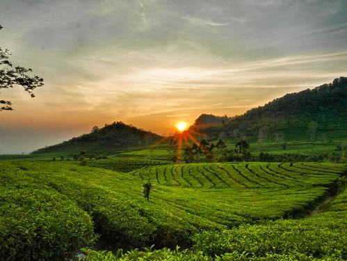 sunrise indonesia volcano lembang teaplantation tangkubanperahu jawabarat