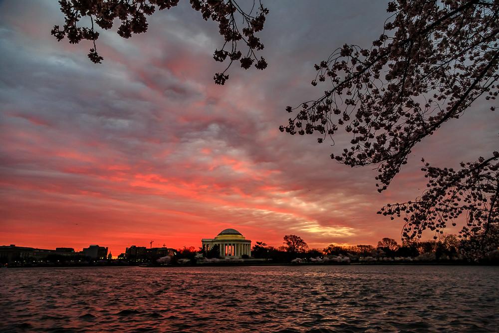 2017 华盛顿樱花-1