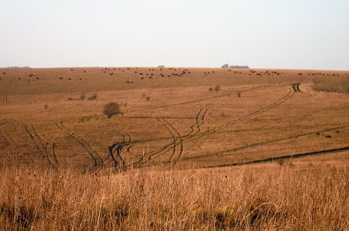 Salisbury Plain, off American Road