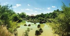 Japanese Tea Gardens. #japaneseteagarden #sanantonio #navarrofamily #daytrip