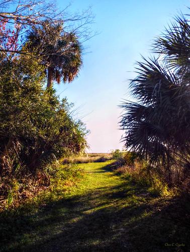 outoftheshadows thelakewoodruffnationalwildliferefuge outdoors nature trees wetlands landscape scenic grass sky bluesky deleonspringsflorida