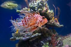 In the tanks, Monterey Bay Aquarium