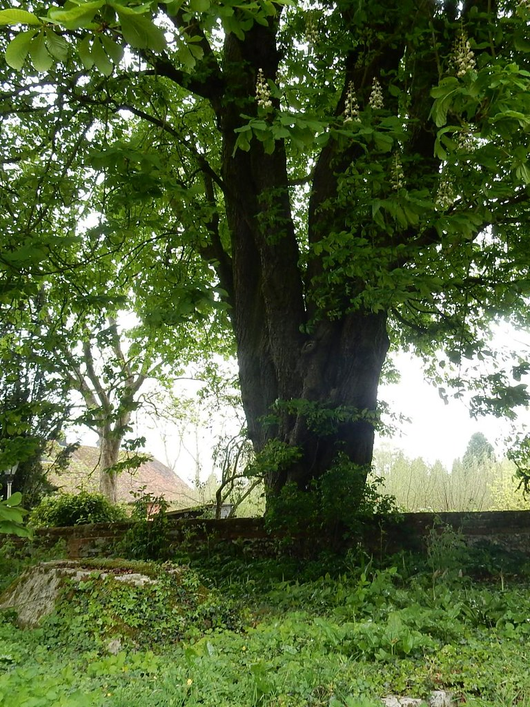 Twin tree Great Chesterford to Newport