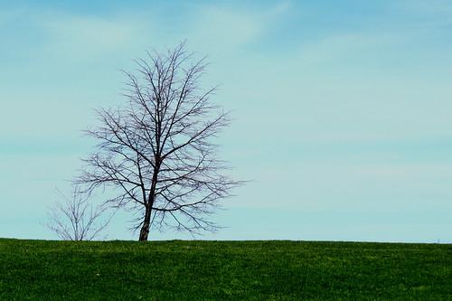 ottawa ontario canada spring printemps arbre tree horizon lakeviewpark andrewhaydonpark marina