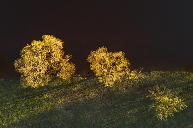 Trees | Kaunas Aerial