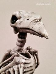 Halloween Bird Skeleton