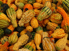 Yay! Gourds!