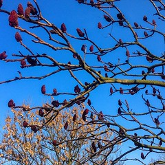 Like birds :) #NoFilter #Nature