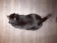 #貓 #cat #黑皮 #奶弟 #無我髮廊