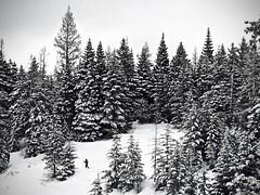 Meacham Divide Nordic Ski Area