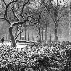 Rittenhouse Square.