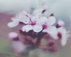 Primavera (2/3)
