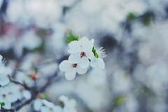 Primavera (3/3)