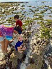 Madeleine is thrilled to discover crabs in a tidal basin off the coast of Bali