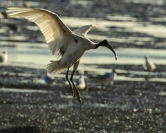 Birds of BHUJ