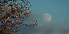 Full moon feb