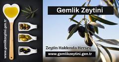 Gemlik zeytin ve zeytinyağı | Gemlikzeytini.gen.tr