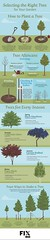 Infographics : Selecting the Right Tree for Your Garden #infographic #Gardening #Tree