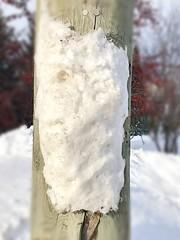 Profil neige 2 sur poteau!